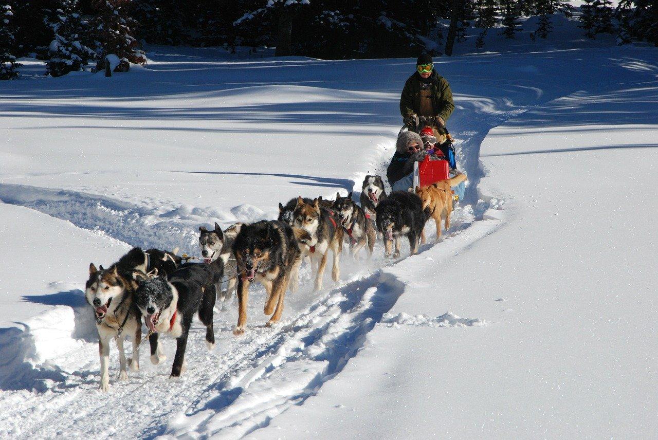 Randonnées en traîneau à chiens